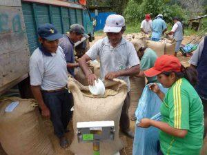 Collecte du cafe coopérative CECOVASA Pérou 2011